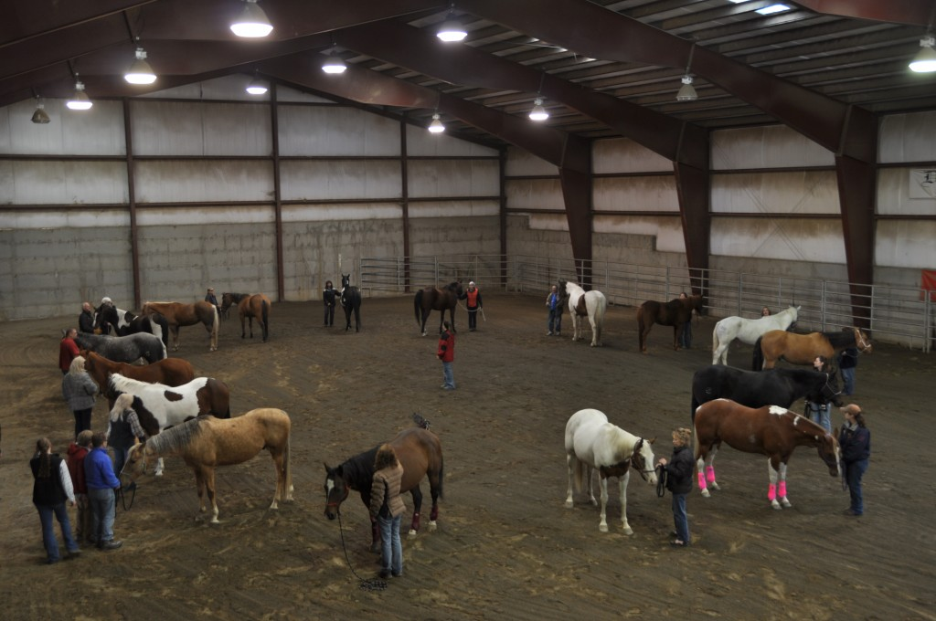 Various Educational Clinics with Horse2Human, Inc.